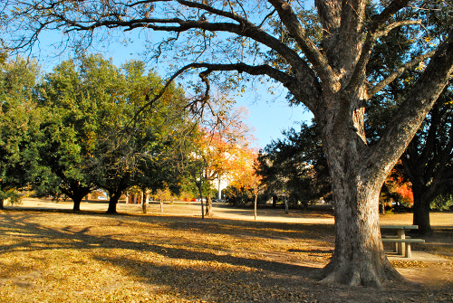 Austin Town Lake Trail by Lacey Baier, a sweet pea chef