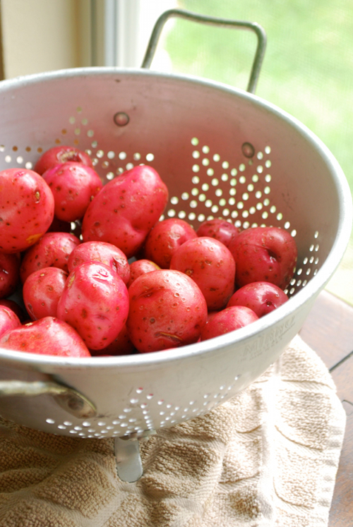 Sautéed Baby Red Potatoes recipe and images by Lacey Baier, a sweet pea chef