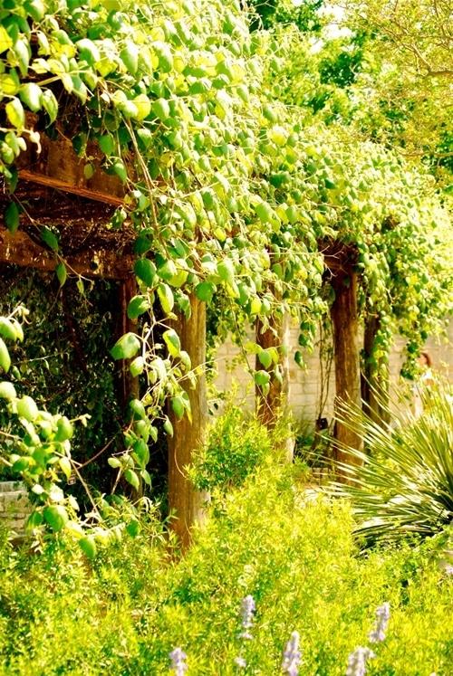 Lady Bird Johnson Wildflower Center in Austin