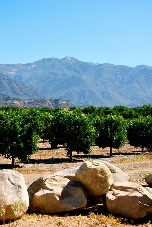 A Day in my Hometown: Ojai, California