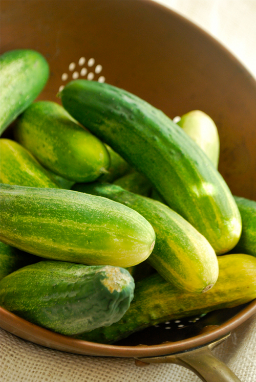 Homemade Dill Pickles by Lacey Baier, a sweet pea chef