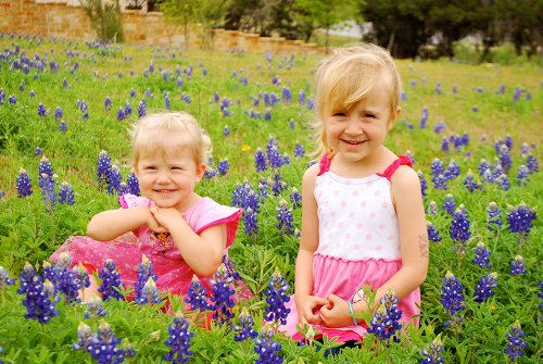 Oh, the Blue Bonnets! by Lacey Baier, a sweet pea chef