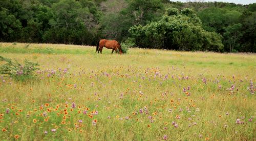 horse-far-away