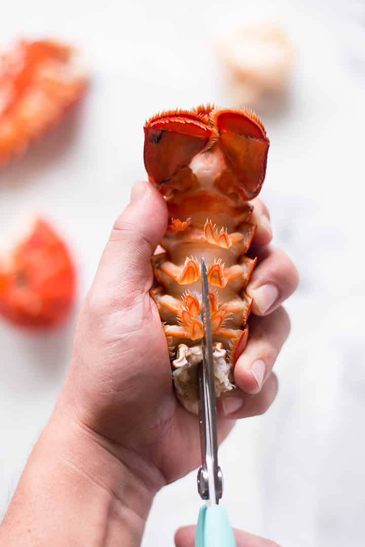 Hand using kitchen shears to cut into the lobster shell which has been boiled. The lobster meat will then be removed and chopped before getting added to the easy lobster bisque recipe.